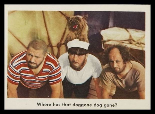 77 Where Has That Doggone Dog Gone