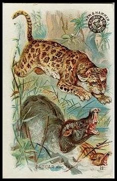 11 Jaguar and Tapir