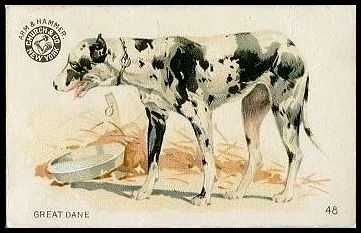 48 Great Dane