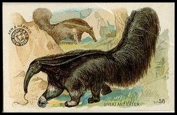 58 Great Ant Eater