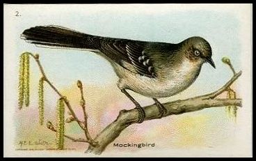 2 Mockingbird