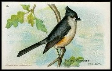 3 Tufted Titmouse